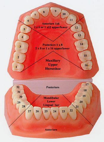 Universal System notation system for tooth numbers